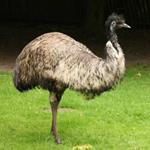 pixwords EMU